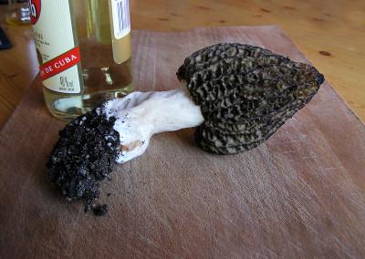 morel mushroom 00012