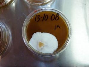 Culutre Mushroom Lab, Tofino