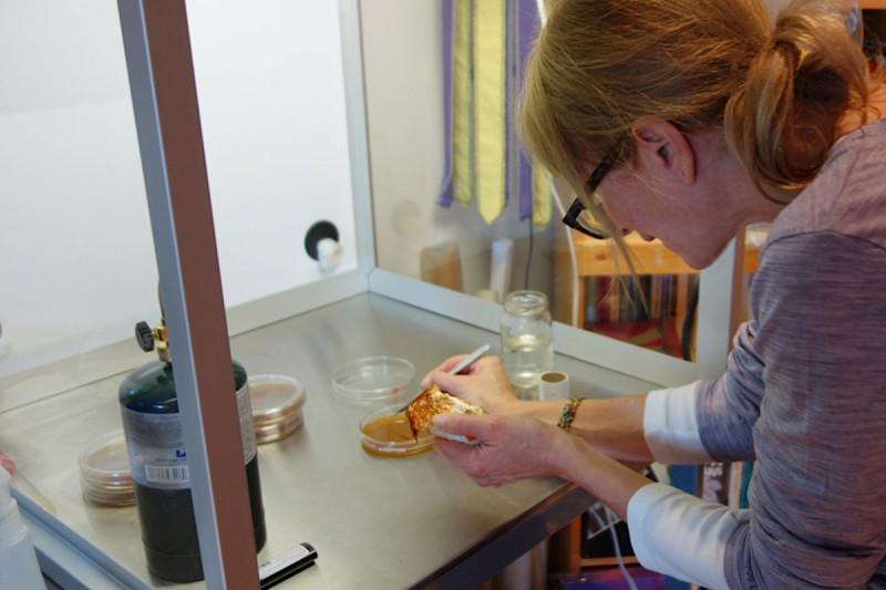 Meronwood Mushroom Lab Tofino Lobster Mushroom Culture2