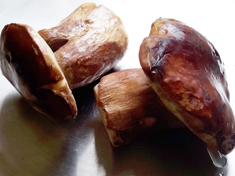 Luca Boletus Mushroom, Ontario
