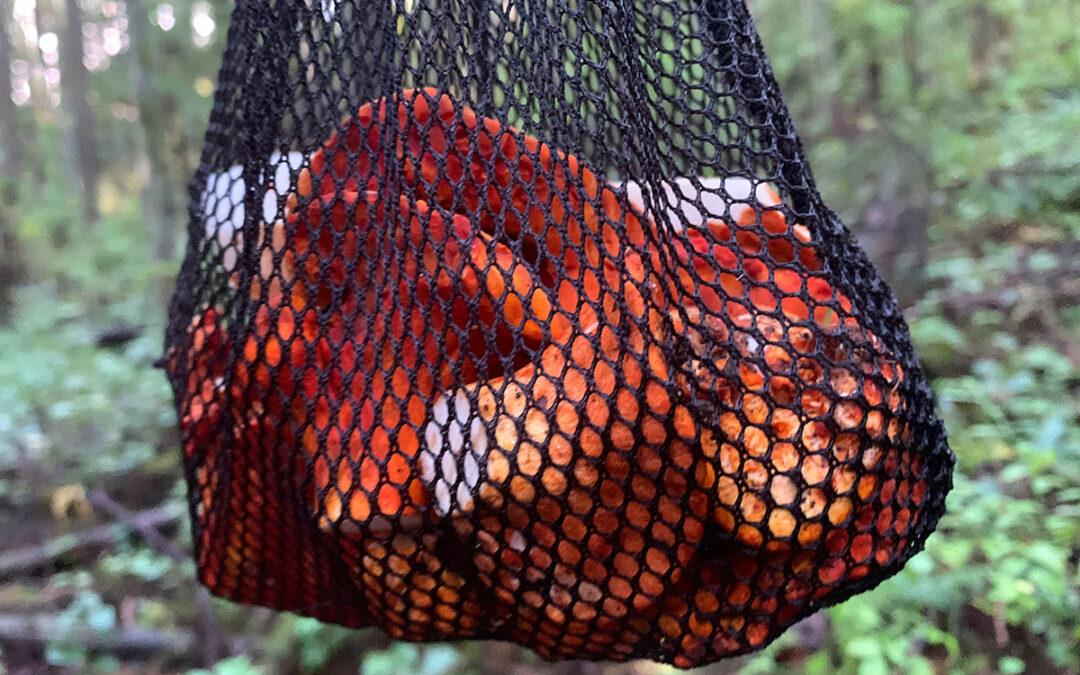 lobsters20201013-0794