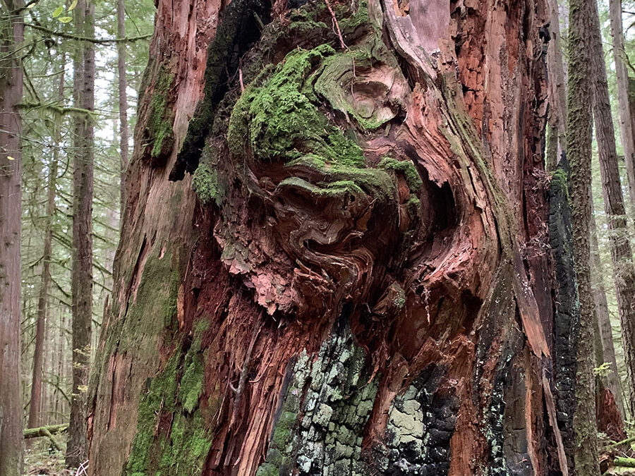 tree20201102-1145